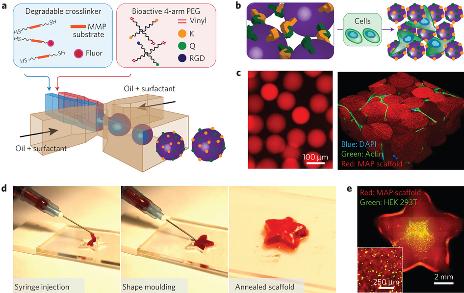 Accelerated wound healing by injectable microporous gel scaffolds.