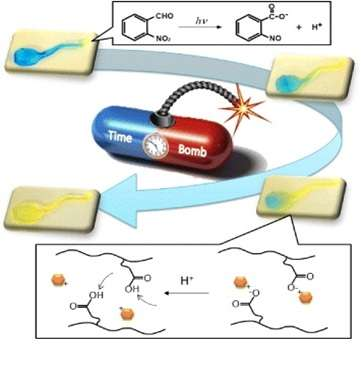 Researchers seek to improve drug delivery with hydrogels.