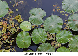 Hydrophyte Images and Stock Photos. 160 Hydrophyte photography and.