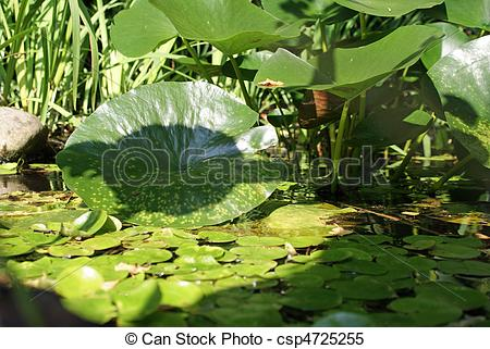 Stock Images of acquatic plants.