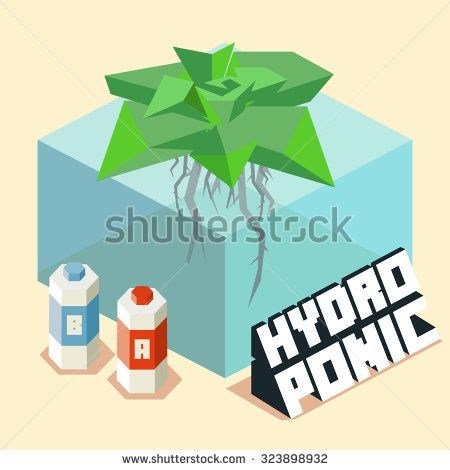 hydroponic for home gardening. Isometric vector illustration.