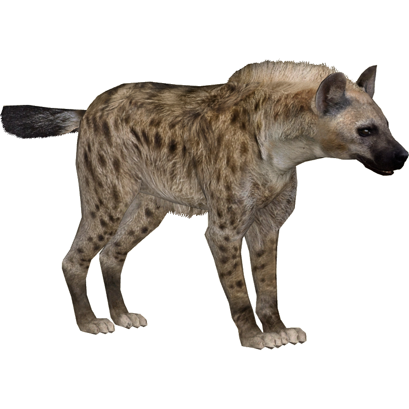 Hyena, Animal, PNG, Transparent Image.