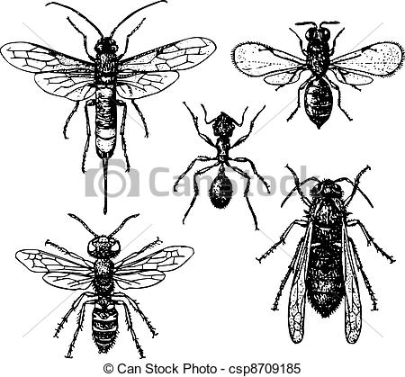Clipart Vector of Ant and mosquitos.