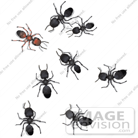 Hymenopteron clipart #4