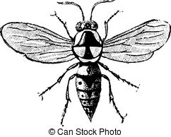 Hymenoptera Clipart and Stock Illustrations. 86 Hymenoptera vector.