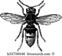 Hymenoptera Clipart Illustrations. 45 hymenoptera clip art vector.