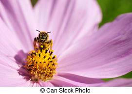 Hymenoptera Stock Photo Images. 1,609 Hymenoptera royalty free.