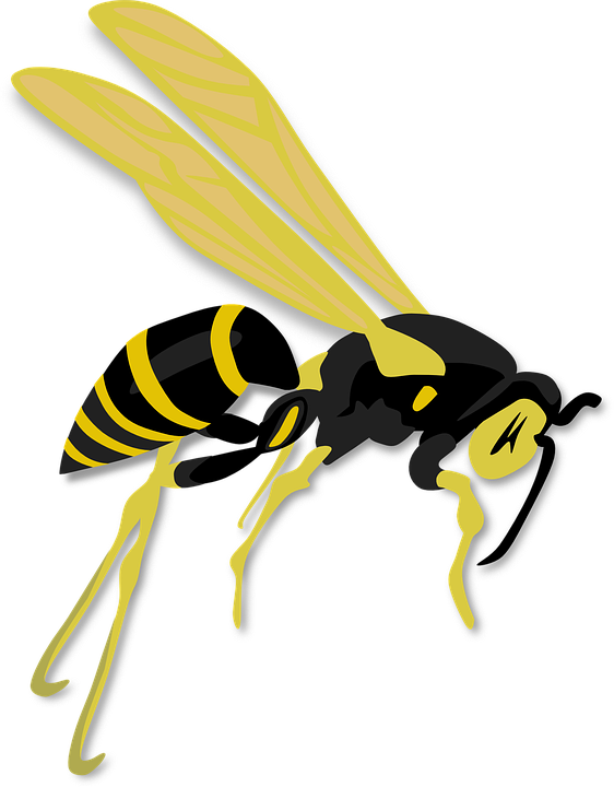 Free vector graphic: Wasp, Insect, Hymenoptera, Animalia.