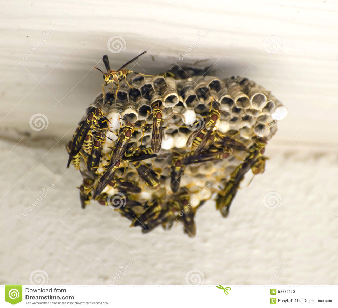 Hymenoptera Stock Photos, Images, & Pictures.