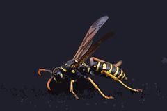 Hymenopteran clipart #13