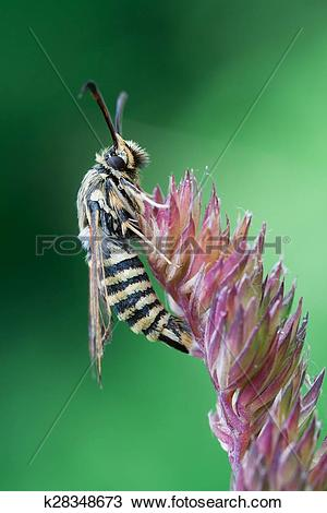 Stock Photo of Hymenoptera k28348673.