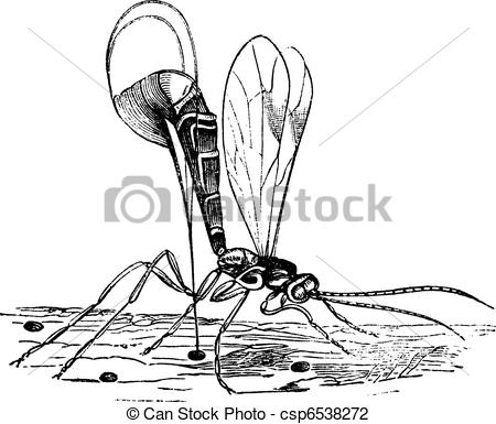 Hymenopteron clipart #18