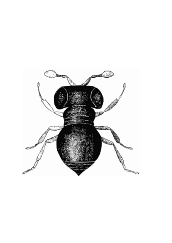 Hymenopterous insect clipart #10