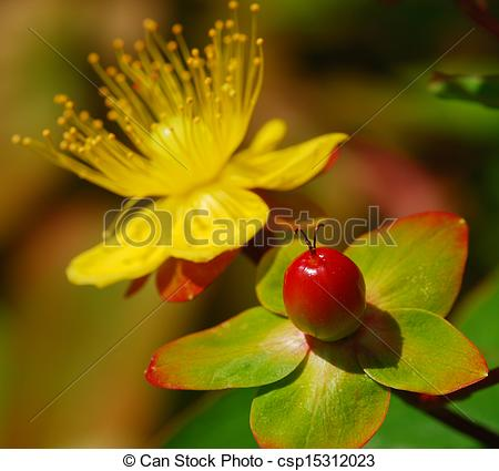 Stock Photo of yellow flower and berry.