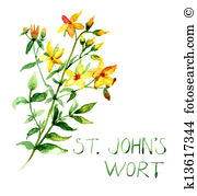 Hypericum Clipart and Stock Illustrations. 12 hypericum vector EPS.