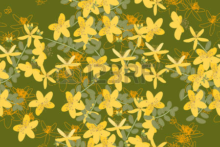 108 Hypericum Stock Vector Illustration And Royalty Free Hypericum.