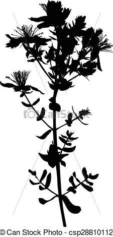 Vector Clip Art of Hypericum St. John's wort flower.