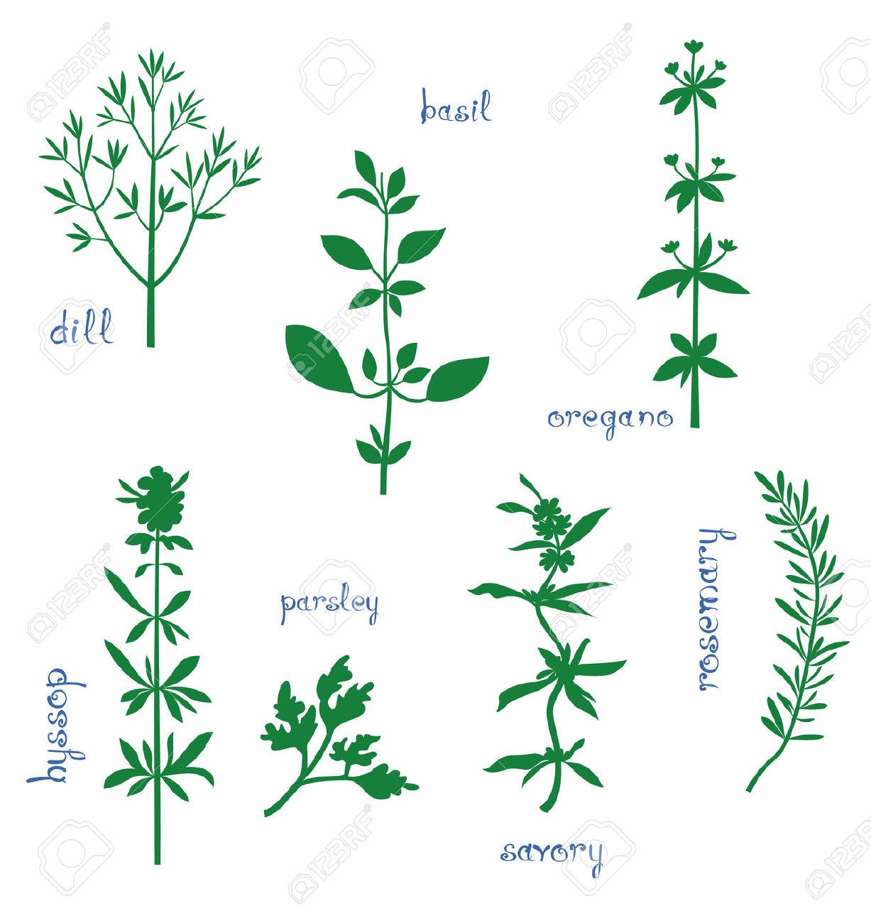 Aromatic Herbs Set. Silhouettes Of Dill, Basil, Oregano, Hyssop.