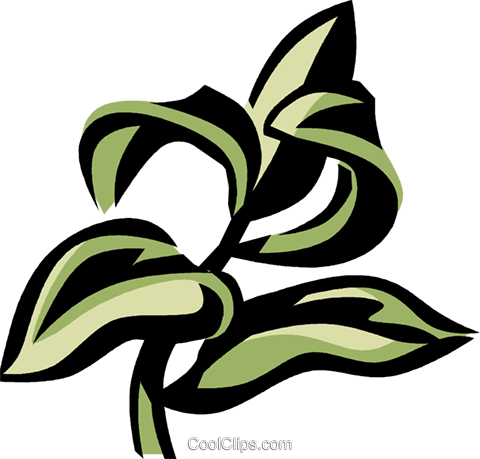 hyssop Royalty Free Vector Clip Art illustration.