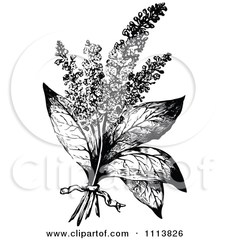 Clipart Vintage Black And White Hyssop With A Ribbon.