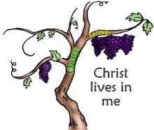 Image result for i am the vine you are the branches clip art.