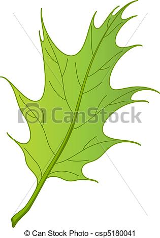 Vector Clip Art of Leaf of oak Iberian, vector.