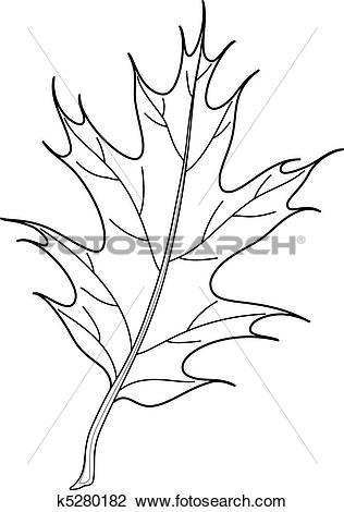 Clipart of Leaf of Iberian oak tree 2, contours k5280182.