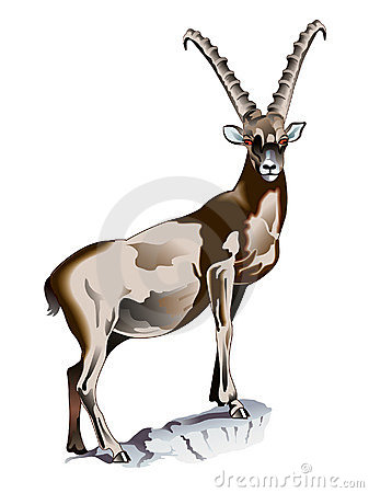 Ibex Stock Illustrations.