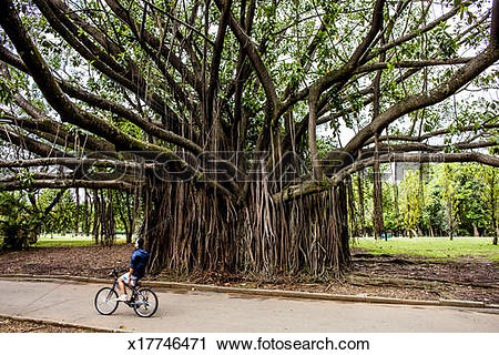 Stock Photography of A scene from Ibirapuera Park in Sao Paulo.