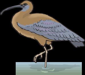 Ibis In Water Clip Art at Clker.com.