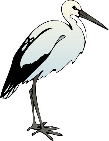ibis clip art.
