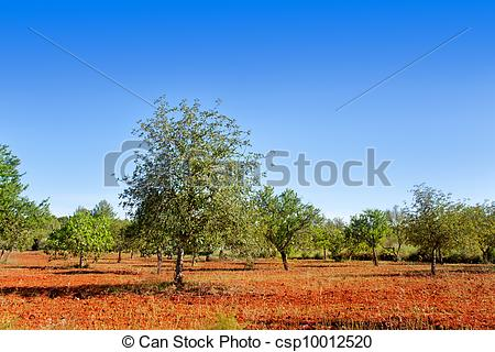 Stock Photo of Agriculture in Ibiza island mixed mediterranean.