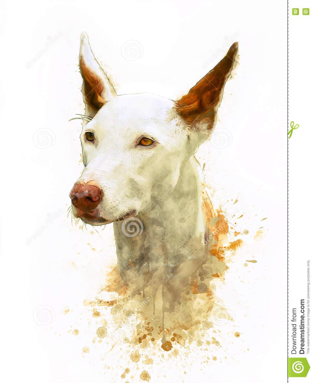 Painting Of Ibizan Hound Stock Illustration.