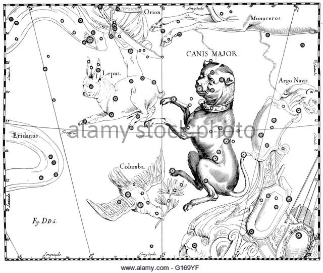 Canis Major Stock Photos & Canis Major Stock Images.