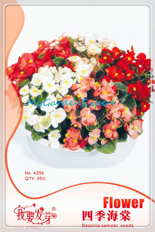 Popular Begonia Mix.