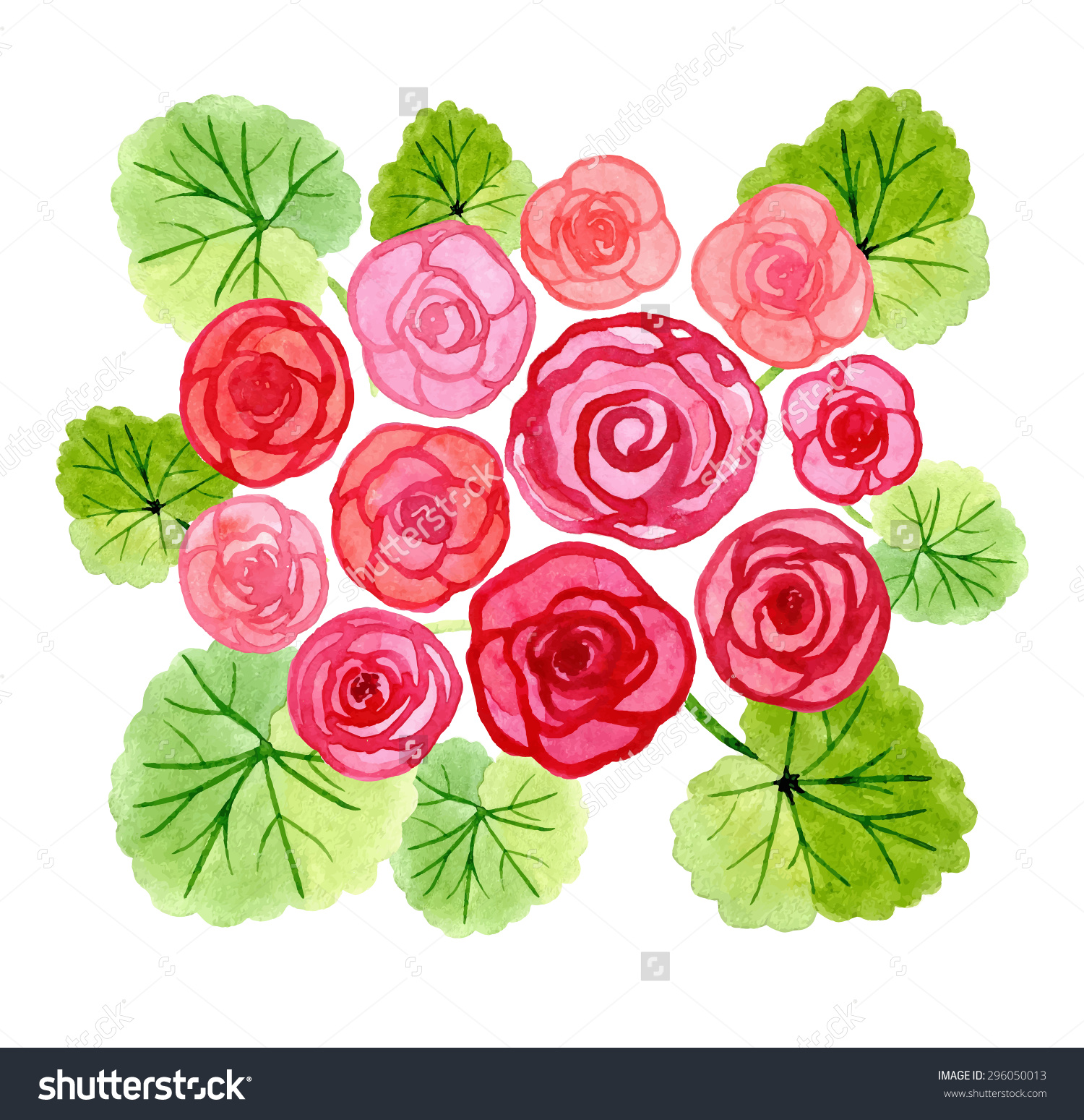 Hand Drawn Watercolor Begonia Flowers Bouquet Stock Vector.