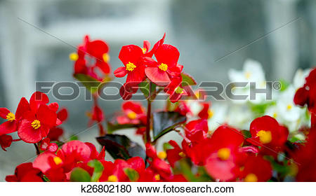 Stock Photography of Ice Flower k26802180.