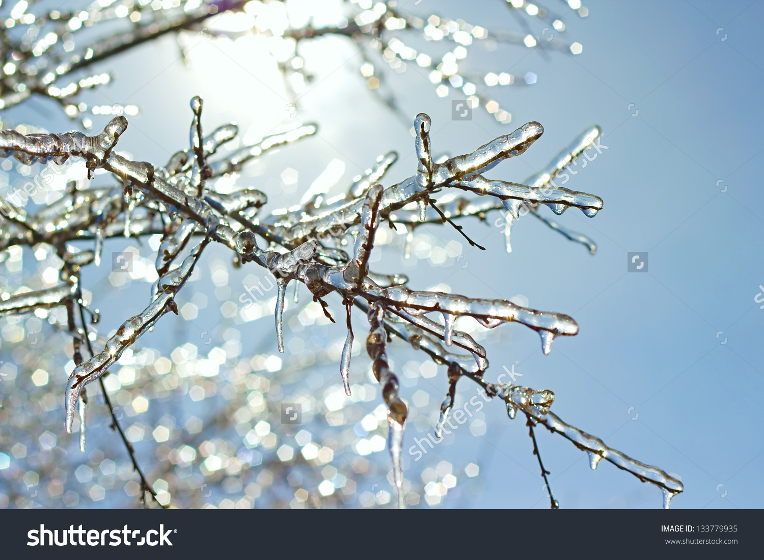 Icy Tree Clipart.