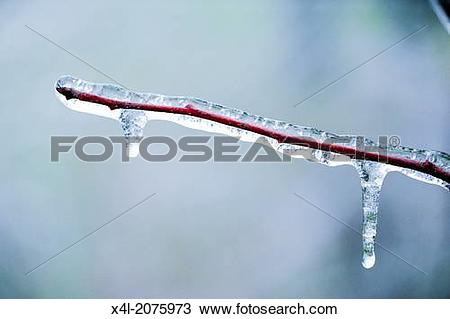 Stock Photo of freezing rain, ice cover, Austria, Lower Austria.