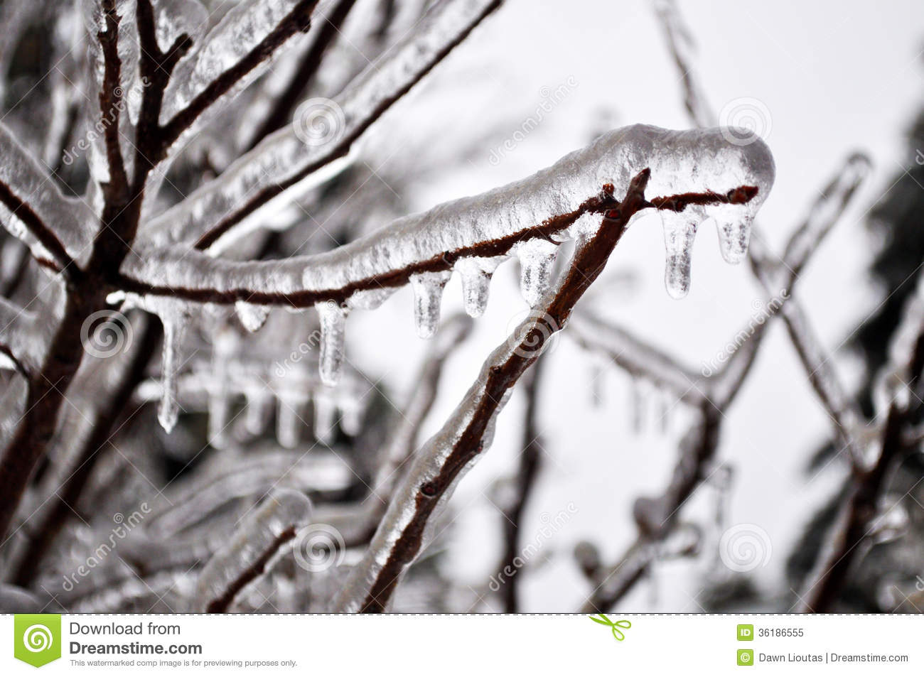Ice Storm Royalty Free Stock Photo.