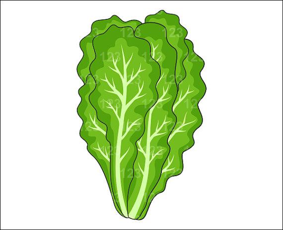 Leaf lettuce clipart -...