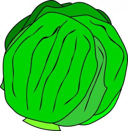 Iceberg lettuce clipart.