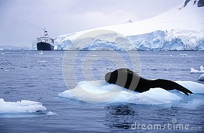 Southern Sea Lion Sleeping On Ice Floe With Glaciers And Icebergs.