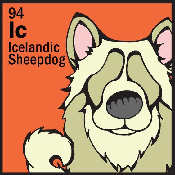 Icelandic Sheepdog http://www.thedogtable.com/the.