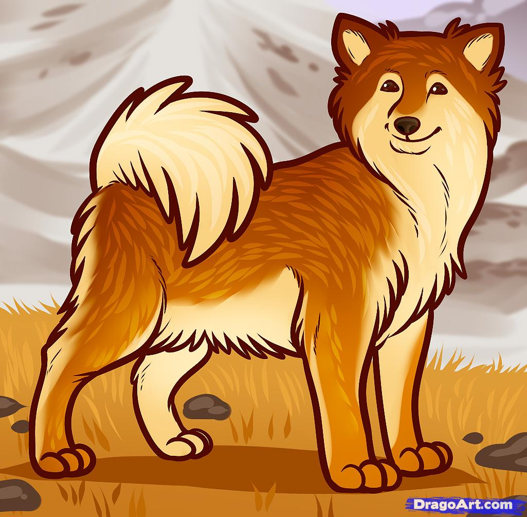 How to Draw an Icelandic Sheepdog, Icelandic Sheepdog, Step by.