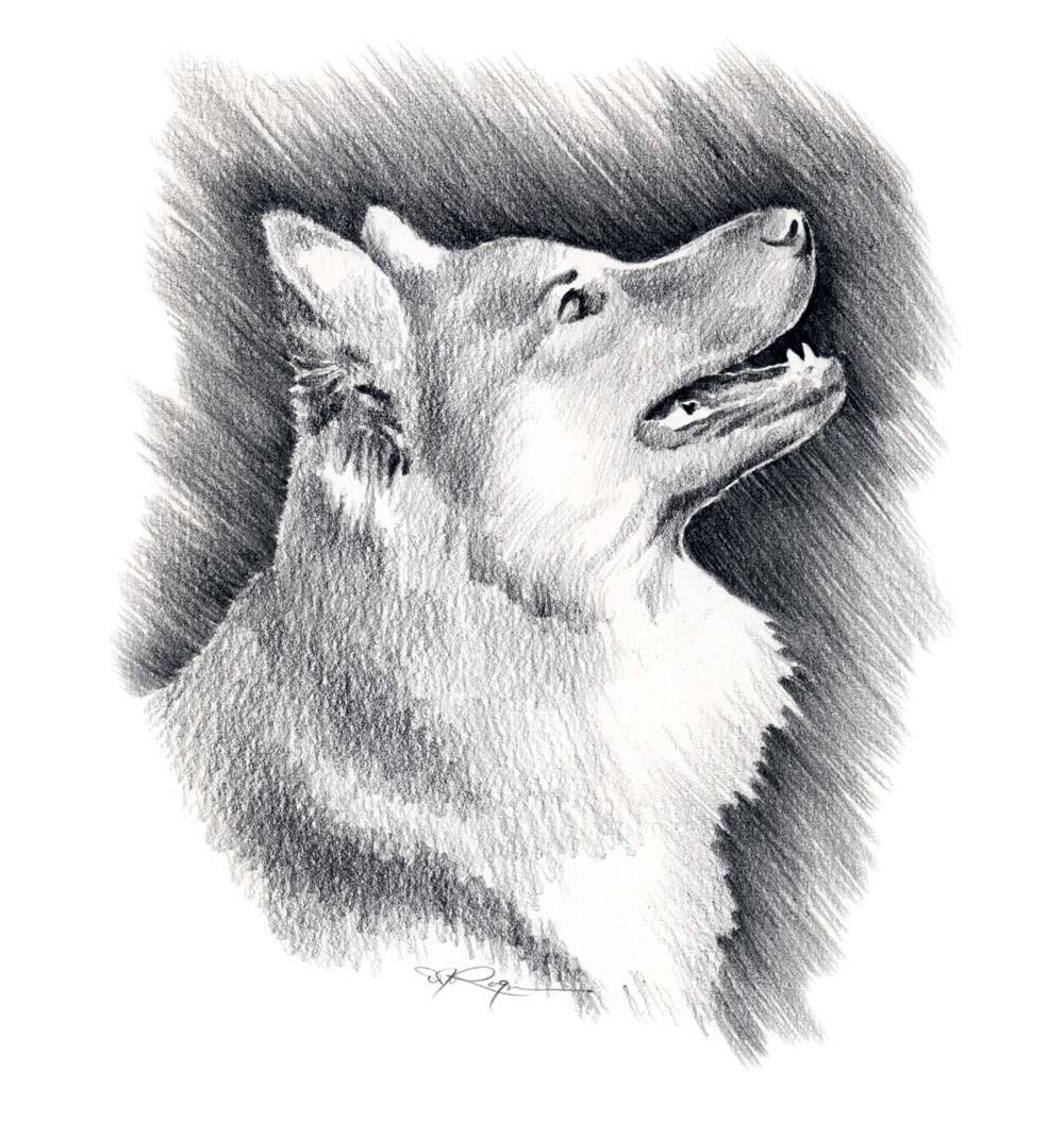 ICELANDIC SHEEPDOG Dog Art Print Signed by Artist DJ Rogers.