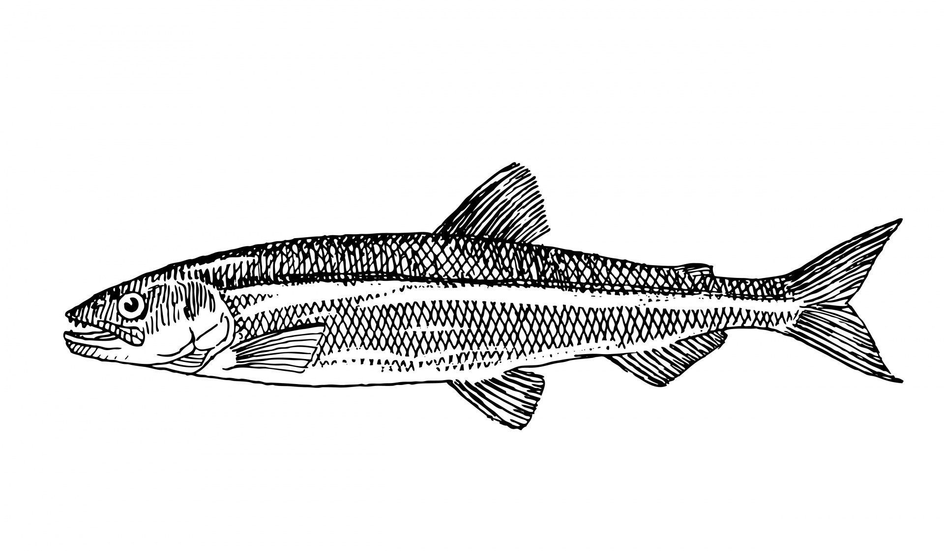 fish clipart images.