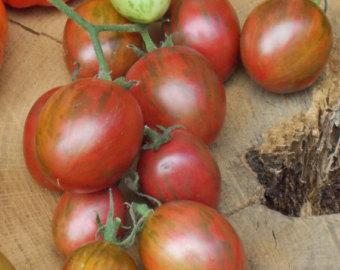 Yellow Icicle Roma Tomato Seeds Yellow tomatoes organic.