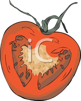 Picture of Half of a Tomato In a Vector Clip Art Illustration.