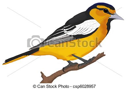 Icterus Stock Illustration Images. 16 Icterus illustrations.
